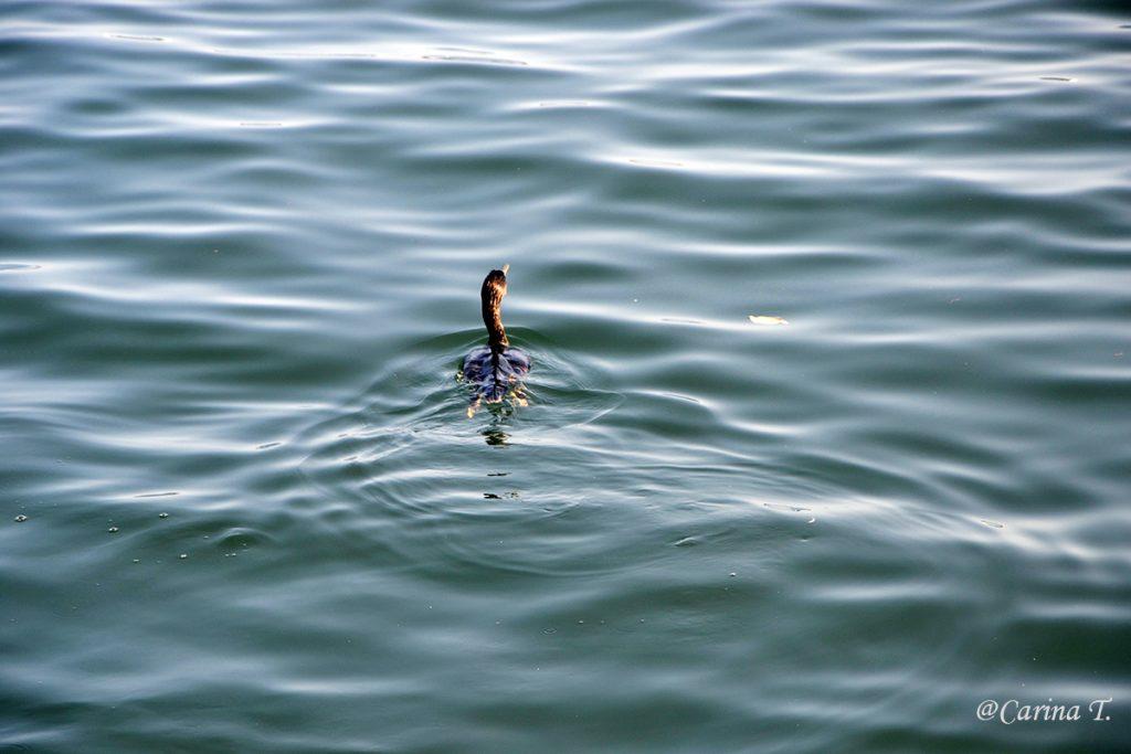 Singurătate… pe Mareea Egee